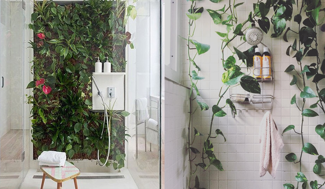 Shower Plants Bring your Bathroom to Life