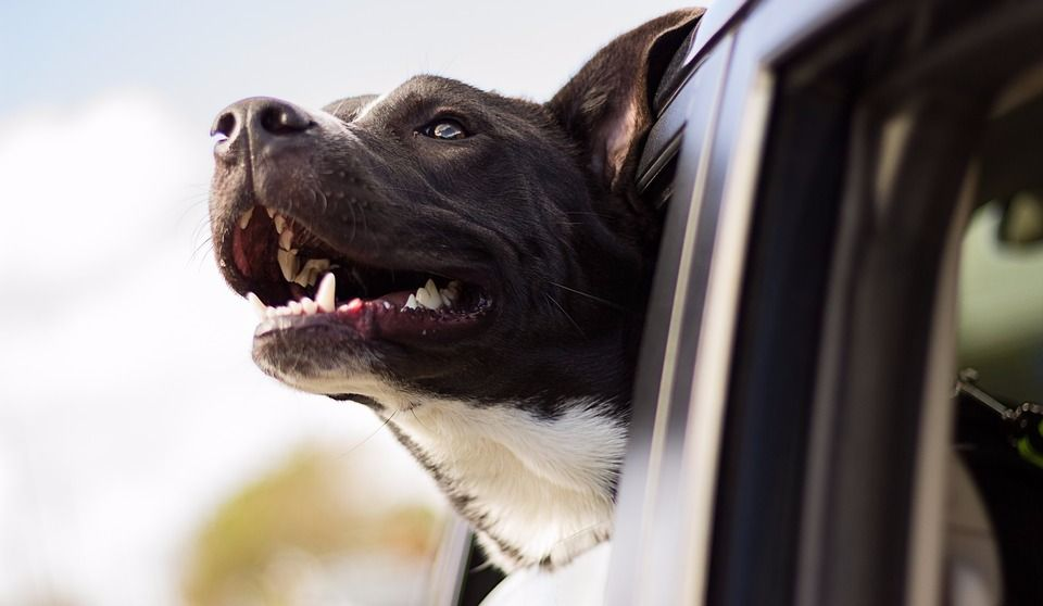 How to Treat Car Sickness in Pets