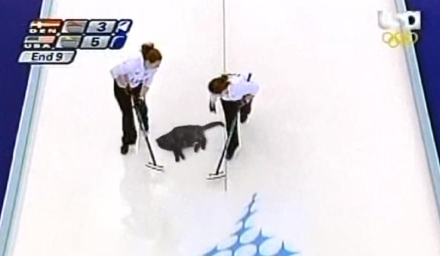 Le curling de chat, superbre discipline olympique