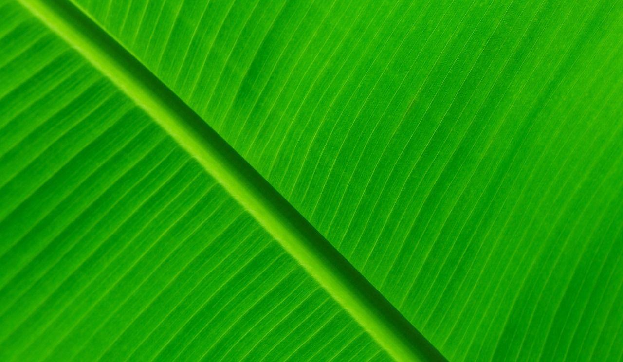 Dettes : le Fonds vert comme fond de tiroir