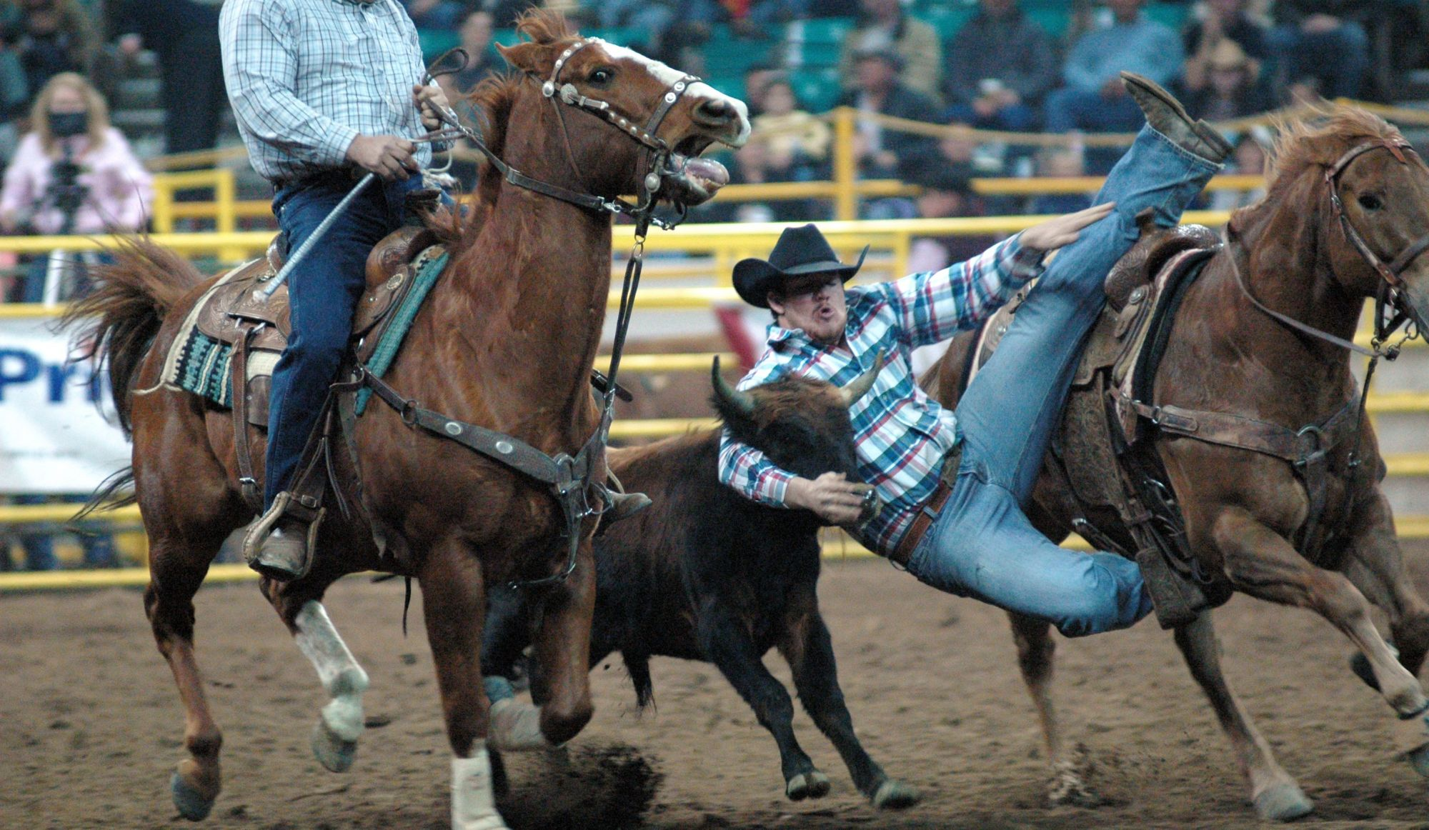 Quebec's Rodeos Deemed Illegal
