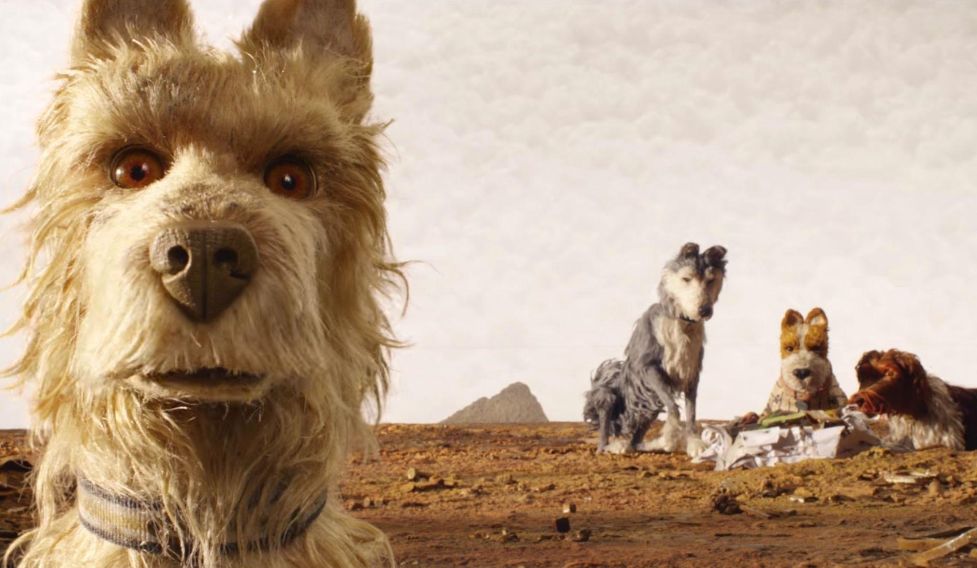 Apportez votre chien au cinéma!