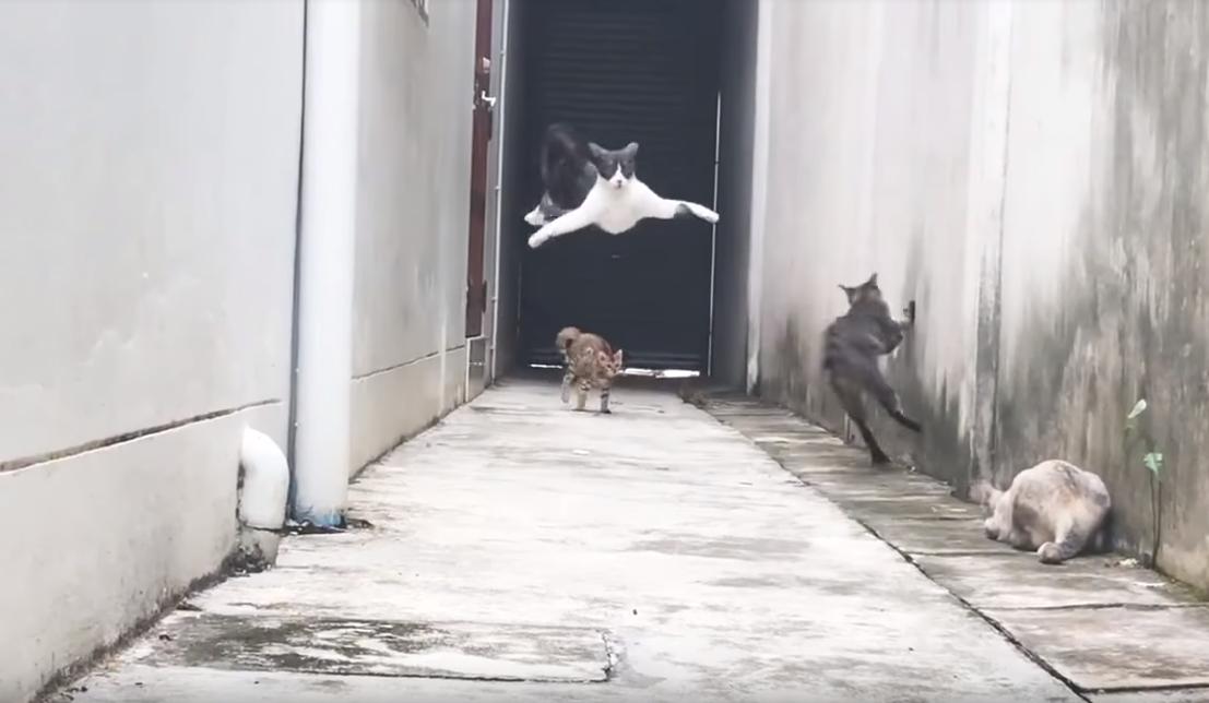 Les chats, rois de l'internet