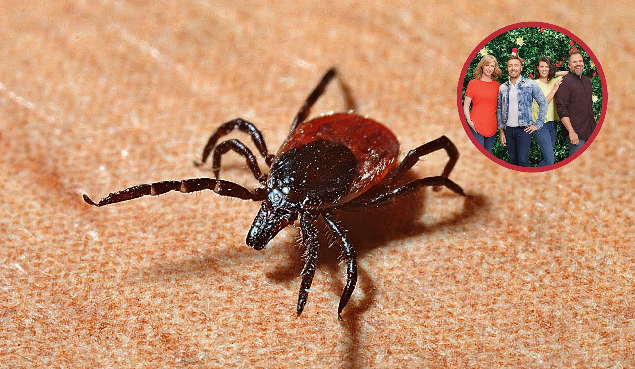 Pourquoi est-ce si compliqué de traiter la maladie de Lyme?
