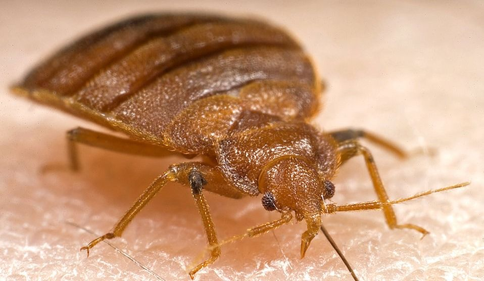 CRAZY Map Shows every Bed Bug Extermination in MTL