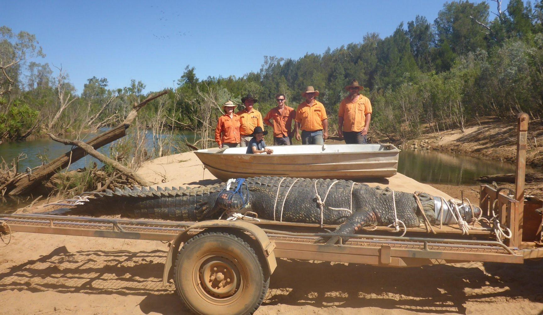 Un crocodile de 600 kilos attrapé en Australie