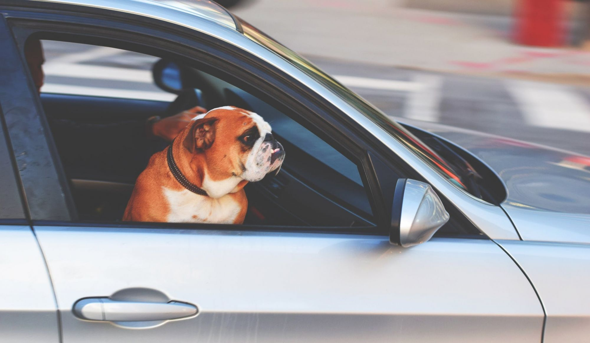Everything you Need to Know about leaving Animals in the Car…