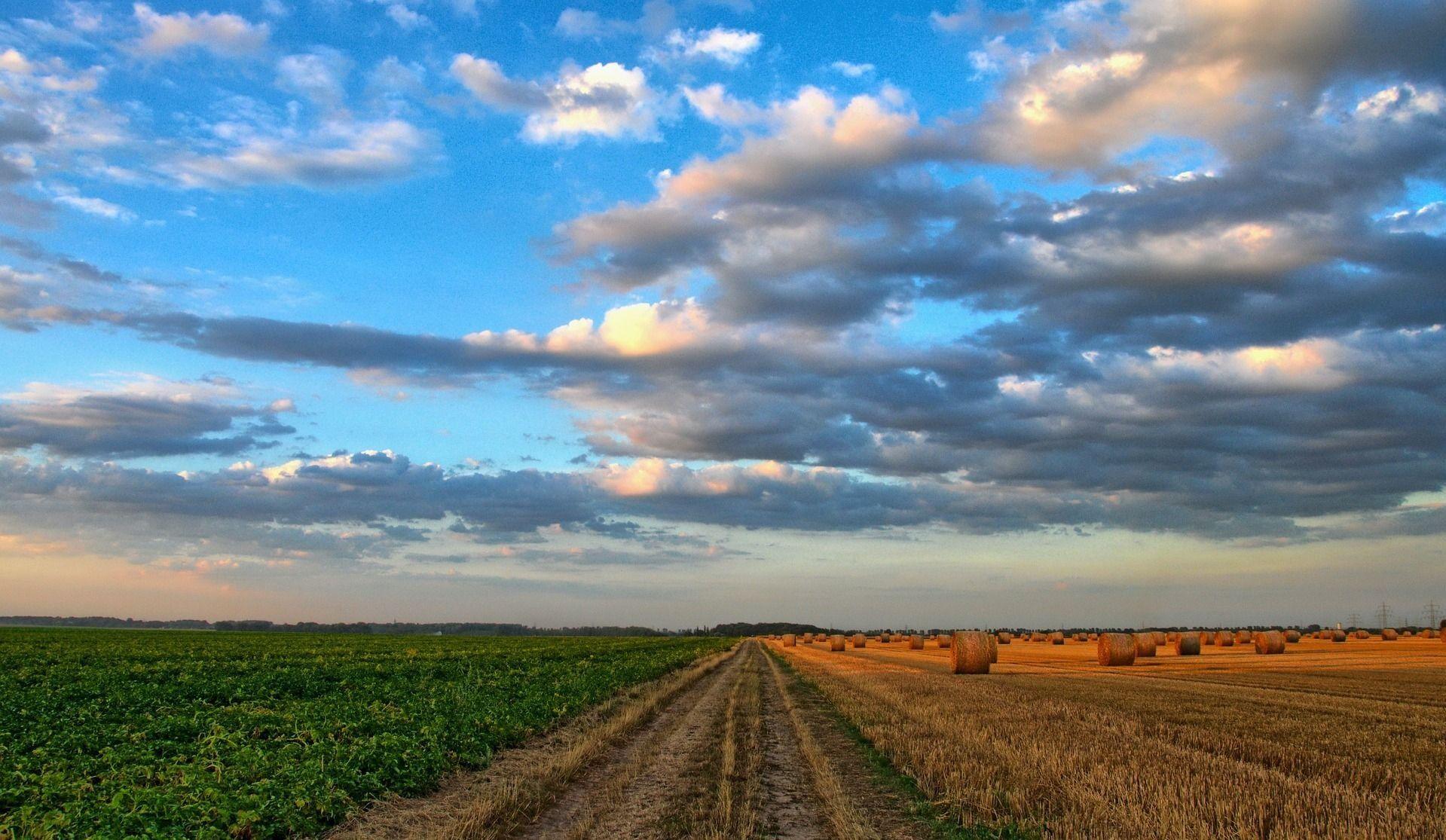 Les agriculteurs québécois attendent impatiemment la pluie